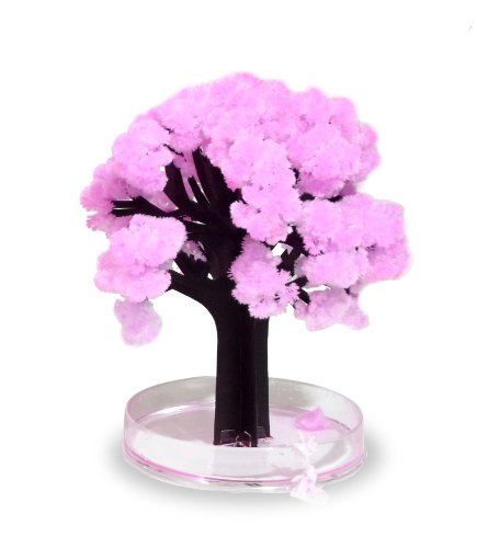 Thumbs Up! Magic Sakura El Asombroso árbol en Miniatura,...