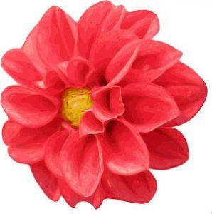 crisantemo para artistas