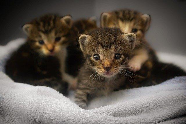 10 Ideas de regalos para amantes de los animales