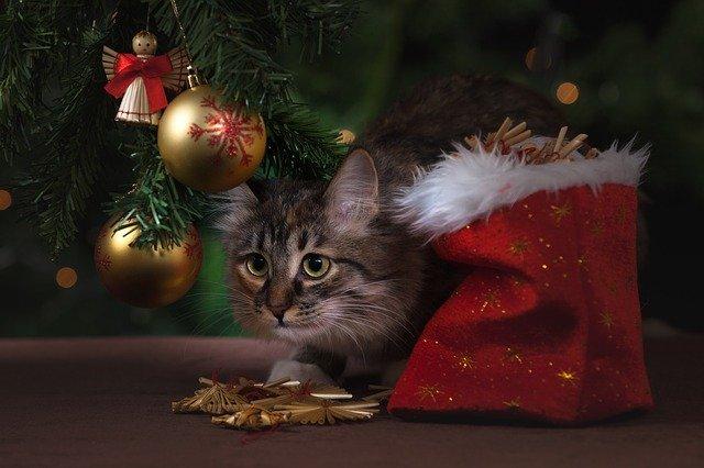 un regalo 2